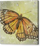Designer Butterfly Collection Acrylic Print