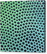 Diatom Cell Wall, Sem Acrylic Print by Steve Gschmeissner