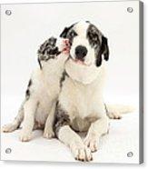 Dog And Puppy Acrylic Print