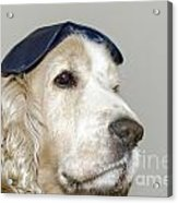 Dog With A Sleep Mask Acrylic Print