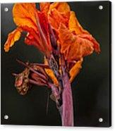 Dying Flower Acrylic Print