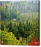 Fall Forest Rain Storm Acrylic Print