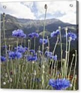 Field Of Flowers In Rural Landscape Acrylic Print