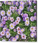 Floral Background Acrylic Print