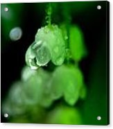 Flower And Drops Acrylic Print