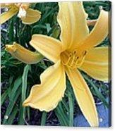 Flower Acrylic Print