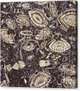 Foraminiferous Limestone Lm Acrylic Print by M. I. Walker