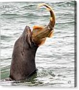 Fresh Catch Of The Day Acrylic Print