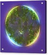 Green Alga, Light Micrograph Acrylic Print