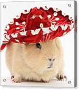 Guinea Pig Wearing A Hat Acrylic Print