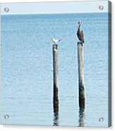 2 Gulls And A Pelican Acrylic Print