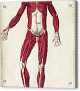 Historical Anatomical Illustration Acrylic Print