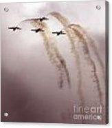 Jordanian Falcons Acrylic Print