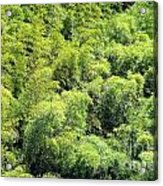 Lush Bamboo Forest Acrylic Print