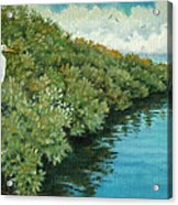 Mangroves 2 Acrylic Print