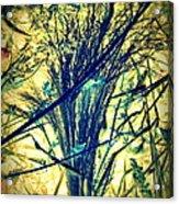 Miiviaa Acrylic Print