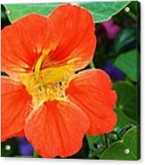 Orange Delight Acrylic Print by Bruce Bley
