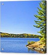 Pine Tree At Lake Shore Acrylic Print