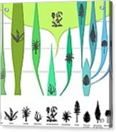 Plant Evolution, Diagram Acrylic Print