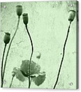 Poppy Art Image Acrylic Print