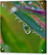 Rain Drop Acrylic Print