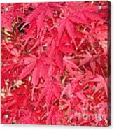 Red Leaves 1 Acrylic Print