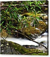 Rhododendron And Waterfall Acrylic Print by Thomas R Fletcher