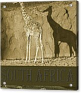 South Africa Acrylic Print