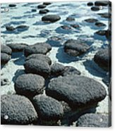 Stromatolites Acrylic Print by Georgette Douwma