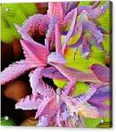 Succulent Blossom Acrylic Print