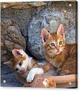 Sweet Cats Acrylic Print