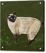 Sweetest Siamese Acrylic Print by Leslie Allen