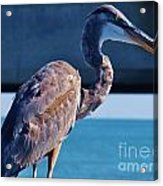 The Great Heron Acrylic Print