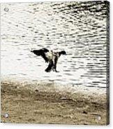 The Landing Acrylic Print