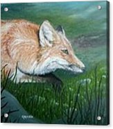 Tod Visits Copper Acrylic Print