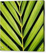 Tropical Palm Frond Acrylic Print