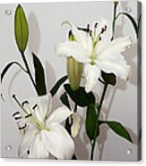 White Lily Spray Acrylic Print