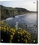 Wildflowers At The Coast, County Acrylic Print
