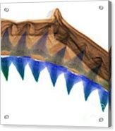 X-ray Of Shark Jaws Acrylic Print