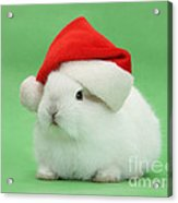 Young White Rabbit Wearing A Christmas Acrylic Print