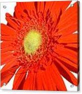 2006a2 Acrylic Print