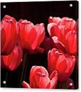 2012 Tulips 02 Acrylic Print