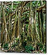 20120915-dsc09882 Acrylic Print