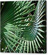 20120915-dsc09902 Acrylic Print