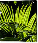 20120915-dsc09911 Acrylic Print by Christopher Holmes