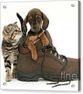 Kitten And Puppy Acrylic Print by Jane Burton