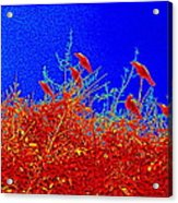 Crows Crows And Crows Acrylic Print