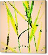 Water Reed Digital Art Acrylic Print