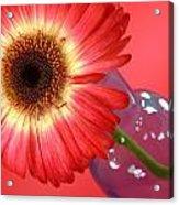 2399c-001 Acrylic Print