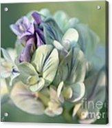 Alfalfa In Shades Of White Acrylic Print